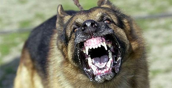 aggresive-dog-2