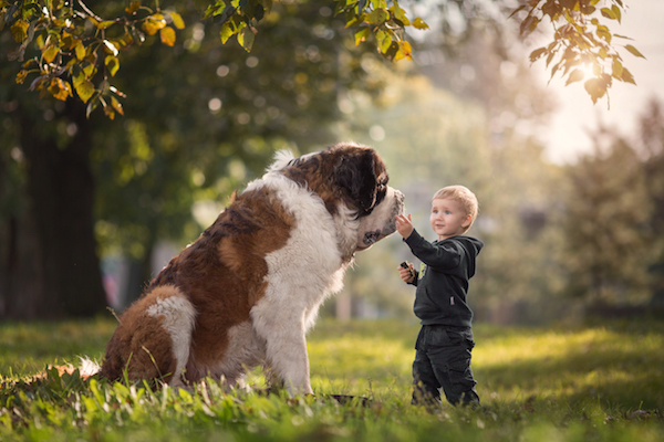 Saint-Bernard-Little-Kids-Big-Dogs-Andy-Seliversoff-thumb
